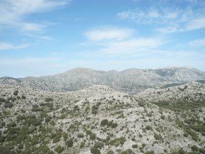 Canuto de los Monteros P.N de los Alcornocales (Cadiz)